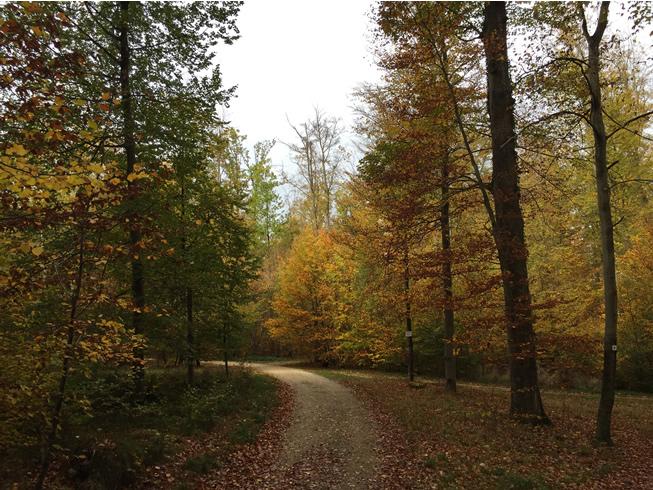 Wald rund um Linsenhofen
